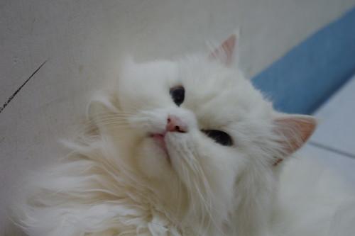 我的愛貓~新手試貼