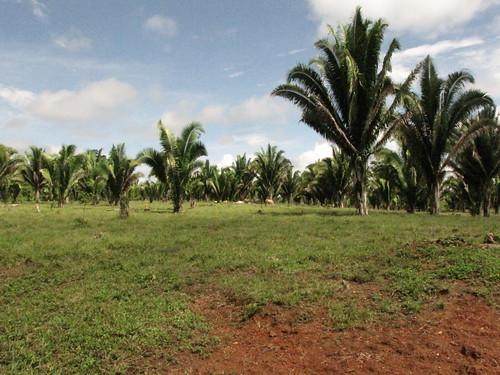cattle ranch, Conejo, Belize