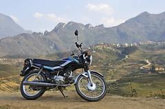 52_LAO76980077 (TC Yuen) Tags: vietnam sapa hmong terracefarming locai