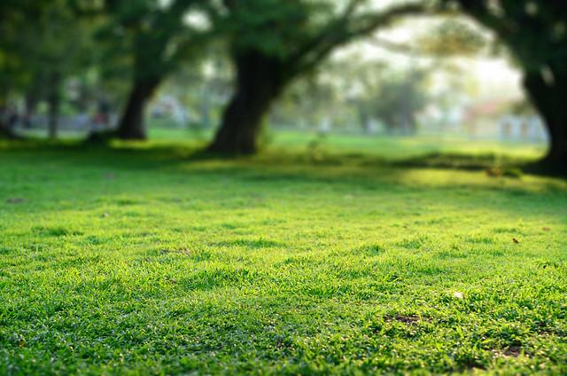Sunny Green