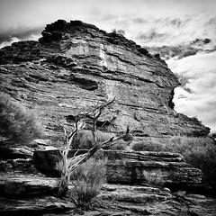 Kalbarri National Park - WA (Aurelien VIVIER) Tags: blackandwhite bw tree square nikon noiretblanc australia nb western arbre australie d90 kalbarrinationalpark 1685mmf3556 aurelienvivier