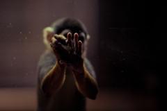 (Gabriel Asper) Tags: berlin zoo monkey singe