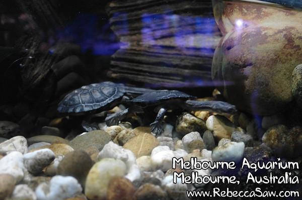 MELBOURNE AQUARIUM-30
