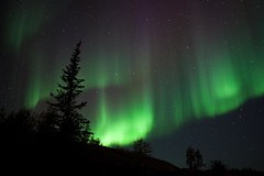 (Darren Horn) Tags: trees sky canada silhouette horizontal night stars north nwt aurora astronomy northwestterritories northernlights auroraborealis borealis yellowknife