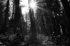 Light the Way (Cindy's Here) Tags: trees bw sunlight canada canon manitoba trail sunflare paintlake