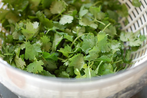 Cilantro by Eve Fox, Garden of Eating blog, copyright 2011