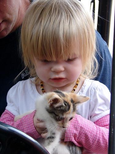 Kittens Pic 6
