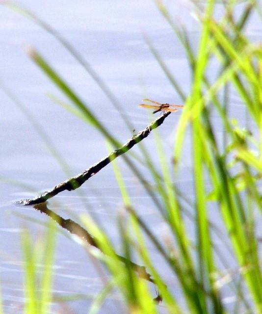 070712_dragonfly