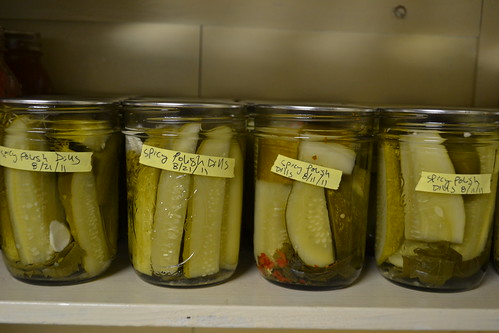 spicy polish dill pickles
