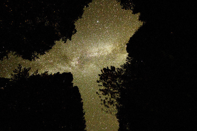 Milky way through the canopy