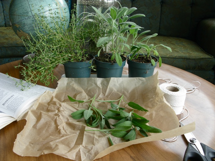 drying herbs sage thyme 002