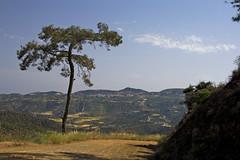 road to Lefkara (-Filippos-) Tags: road pine forest cyprus 2010 lefkara