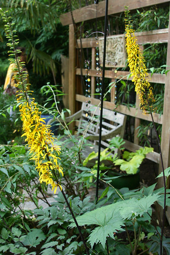 lovely ligularia