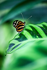 Papillon à honfleur 2 (sylvain.landry) Tags: travel family sky france green art nature canon butterfly photography eos photo lomo europe bestof raw photos bio vert papillon dos 5d normandie dslr reims normandy sylvain landry mkii bigfav gonfleur remois 5dmkii eos5dmkii sylvainlandry