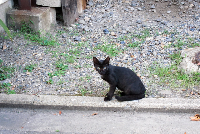 Today's Cat@2011-08-14