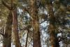 850C0814 (Zoemies...) Tags: trees beach balikpapan melawai zoemies