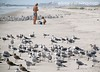 Flocking To Amelia Island Beaches, Shorebirds