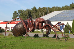 Riesenameise (SteffenKahl) Tags: germany skulptur usedom