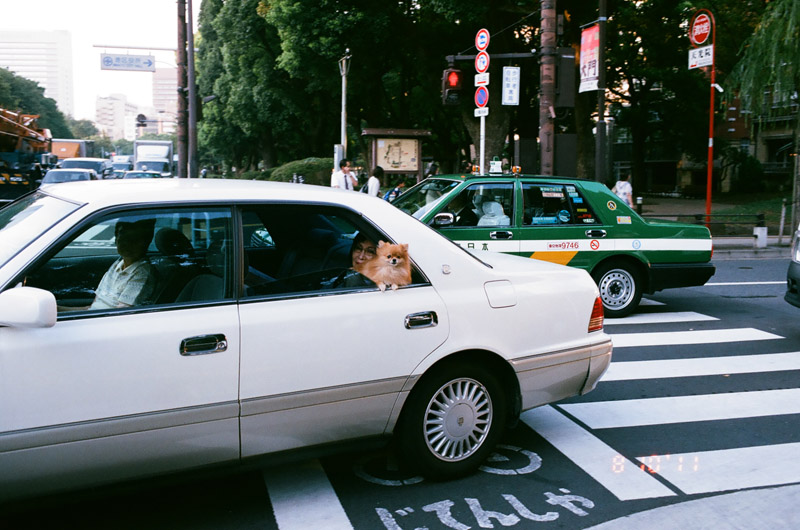dogincar (2 of 9)