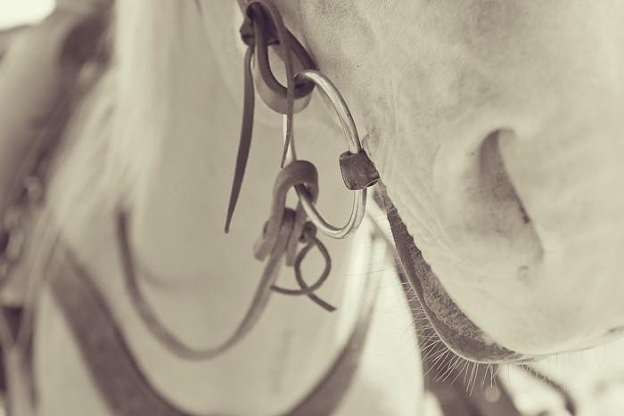 Halifax NS Wedding Portrait Horse Equine photography - Splash & Donna - Nicole Payzant -  (18 of 26)