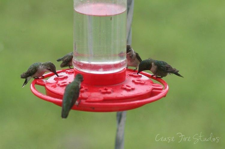 08-23-humming1