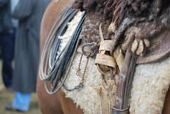 Rodeio_0428 (irapu Junior) Tags: curitiba corao festa cultura gaucho rodeio lao nativo crioulo campeiro camperismo