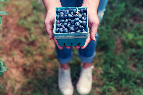 blueberry picking. by weepy hollow