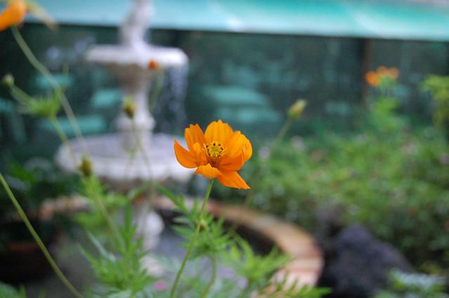 Sonya's garden 5