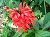 Beautiful flora we've seen (Joanna Jane Liwag) Tags: puertoprincesa palawan butterflygarden crocodilefarm bakershill plazacuartel mitrasranch palawanwildliferescueandconservationcenter palawancitytour
