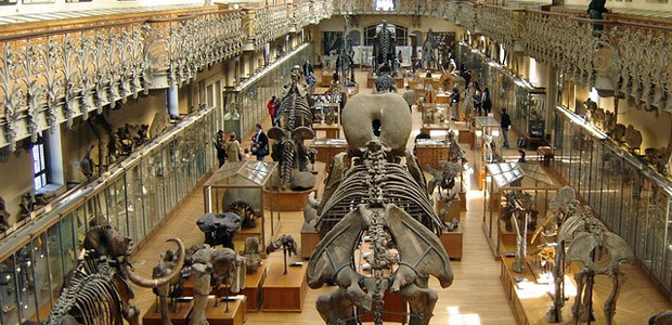 Natural History Museum of Paris