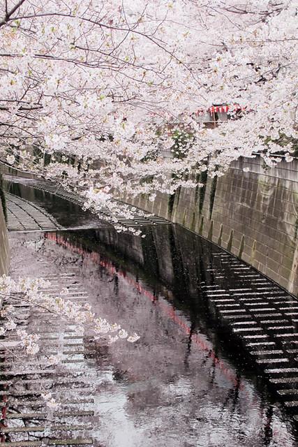 110409_162207_目黒川_桜