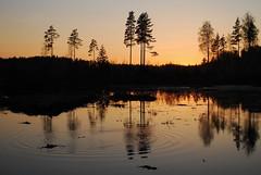 DSC_0454 (Bargais) Tags: sunset reflection tree nature landscape pond waves latvia latvija rudbārži taujēni