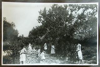 Le ragazze al lavoro negli orti della residenza estiva dell'Istituto a Oleggio, 1935