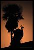 Atardecer en el Alcázar (Javier Martinez de la Ossa) Tags: españa contraluz sevilla spain nikon seville espagne pavoreal realesalcazares siviglia espa–a alcazardesevilla d700 nikond700 doublyniceshot doubleniceshot tripleniceshot mygearandme mygearandmepremium javiermartinezdelaossa blinkagain bestofblinkwinners flickrstruereflection1 flickrstruereflection2 flickrstruereflection3 flickrstruereflection4 4timesasnice