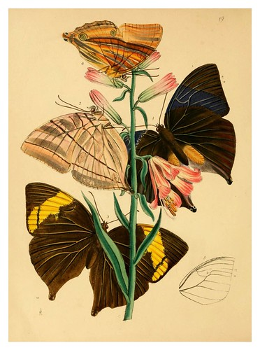 007- The cabinet of oriental entomology…1848- John Obadiah Westwood