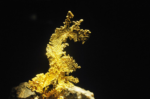 The Dragon | HMNS Mineral Hall