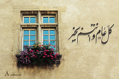 (Alawiyah Alshamimi) Tags: window rose happy    eed