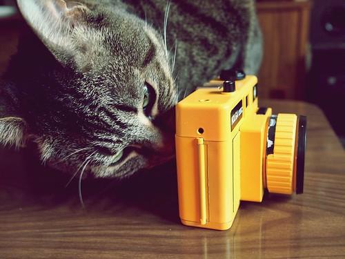 the Cat & the Holga