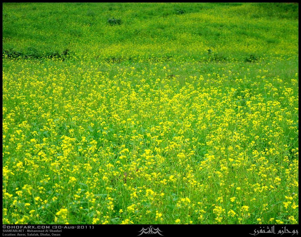 وعقبة أسير ظفار، بتاريخ 30-8-2011 6098846194_624e6ee6a