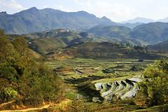 46_LAO76250071 (TC Yuen) Tags: vietnam sapa hmong terracefarming locai