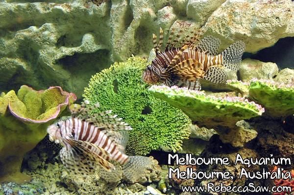 MELBOURNE AQUARIUM-26