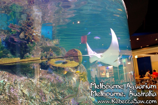 MELBOURNE AQUARIUM-44
