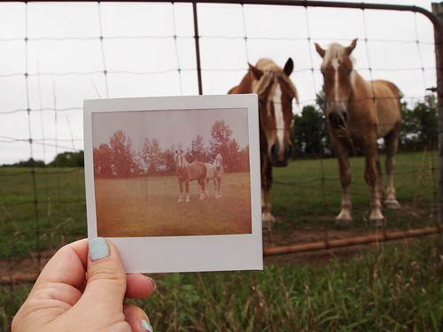 the horses & the Polaroid