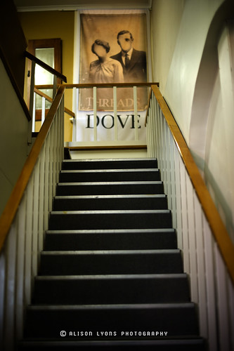 Dove is in the stair by alison lyons photography