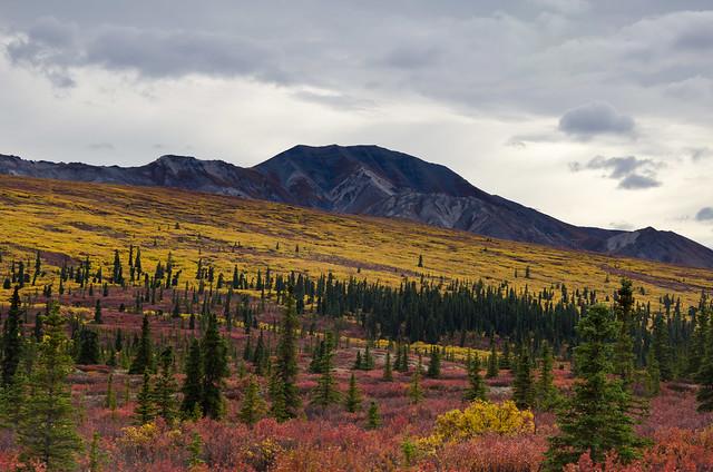 Denali scenery
