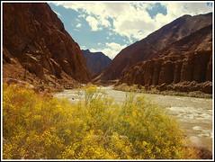 The Yellow Valley (Anindo Dey) Tags: india mountains nature landscape olympus leh himalayas indus ladakh hemismonastery thikseymonastery tsomoriri changthang dey anindo tsokar riverindus e520 sheymonastery olympuse520 oniondo anindodey