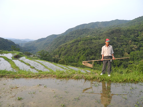 農民示範除蟲技術。