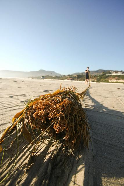 Seaweed at Zuma Beach