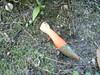 P9100006 (rlg) Tags: mushroom penis 10 saturday september 0910 2011 fpr dogpenismushroom dogpenis nikonp500 201109 09102011 20110910