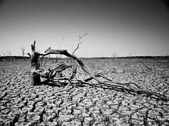 Twisted (Eric W. Hodel) Tags: sky blackandwhite bw lake tree water dallas texas empty conservation dry olympus drought lakelavon gtowneric e620 ericwhodel wwwericwhodelphotocom